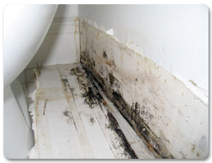 San Diego Mold Inspection Testing   Certified Mold Inspector