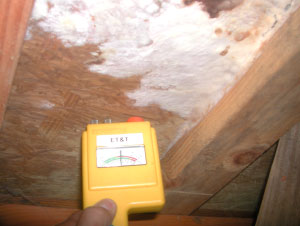 Et T S Mold Inspection And Testing Services For Carlsbad California Include