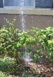 sprinkler-water-damage-1