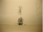 Mold and Water Stains on the Ceiling