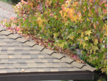 Tree Leaves Can Cause Mold & Water Damage
